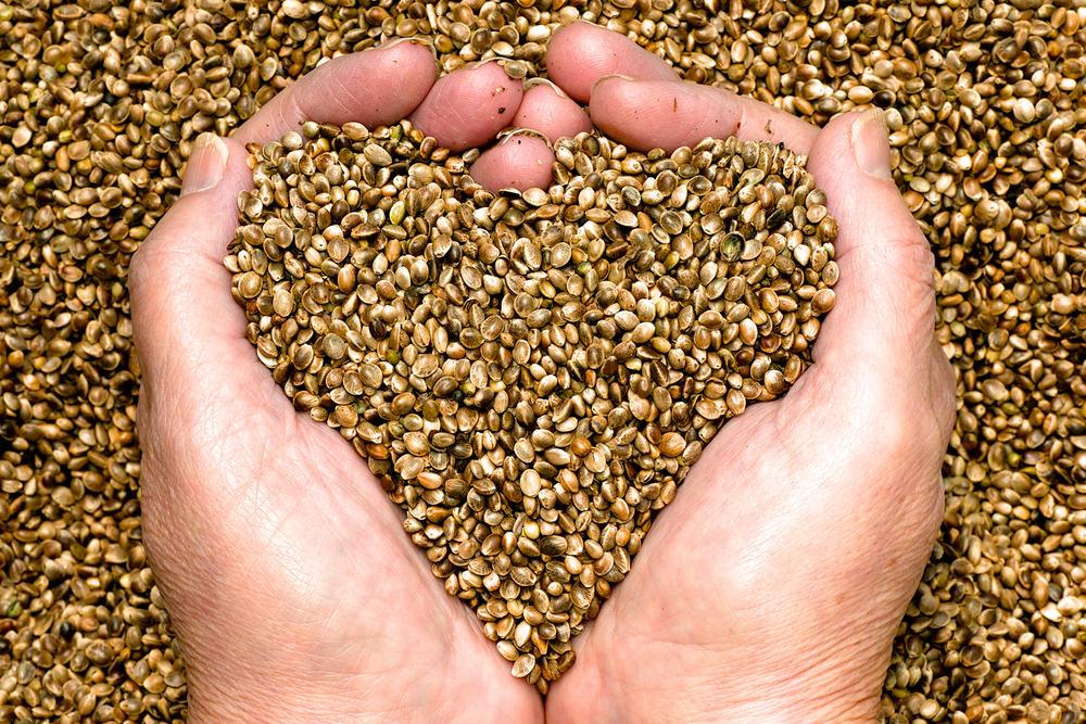 Kanapių sėklos: 7 gydomosios savybės ir 4 būdai pagerinti odos būklę